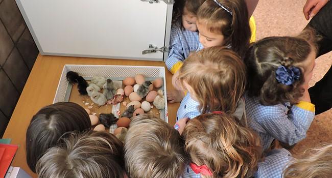 Expectación en las aulas de Infantil del colegio La Salle de Teruel