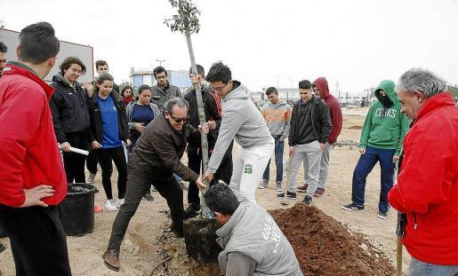 Alumnos de tercero y cuarto de ESO del CC La Salle Maó participan en labores de reforestación