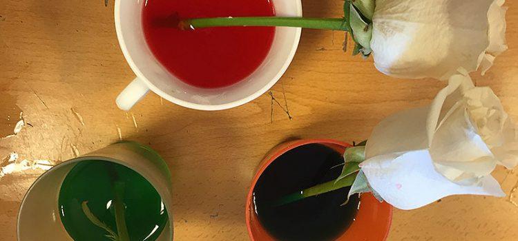 Alumnos de primaria de La Salle Pont d'Inca realizan proyectos y actividades experimentales